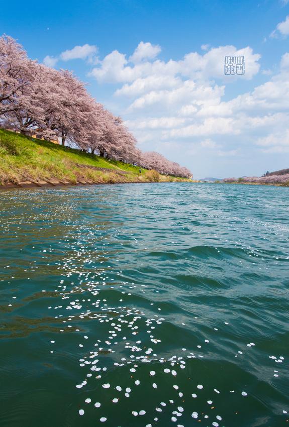 Sakura Raft Dfraw _9165 Hank