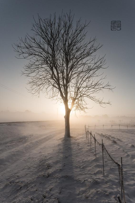 Tree-Silhouette-Monochrome-Dfraw-2017--222-Hanko-Websmall