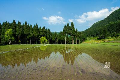Perfect Reflection Dfraw _0734 Hanko