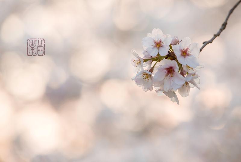 Pinky Blurry Dfraw _8707 hanko