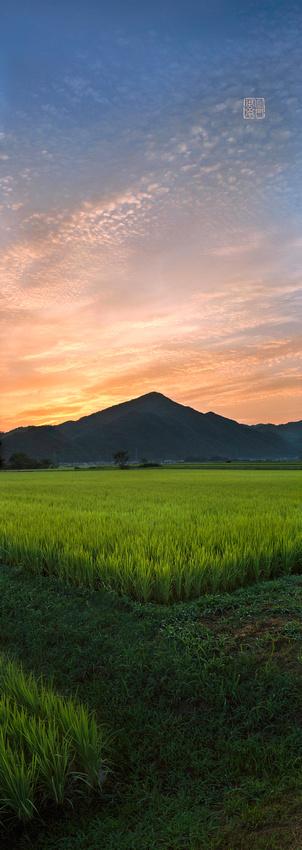 稲と朝焼け AIR29フォト軸