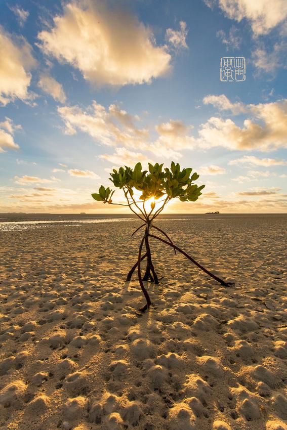 Magrove Sunrise Dfraw _6895 Hanko