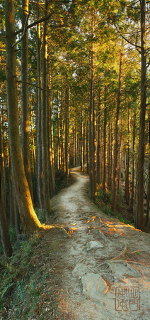 Evening Forest path
